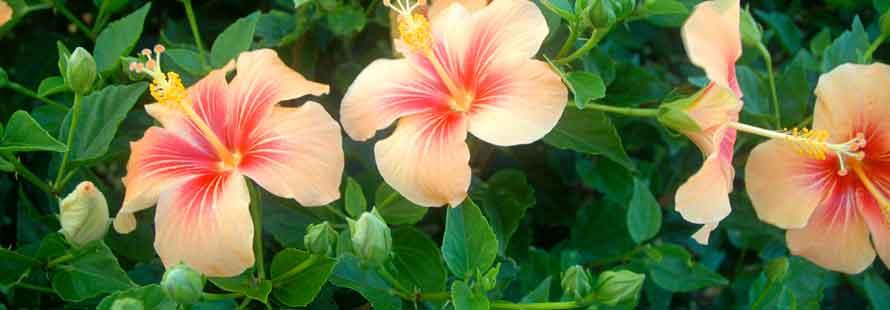 Kauai Landscape Services