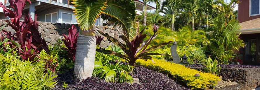 Kauai Landscaping