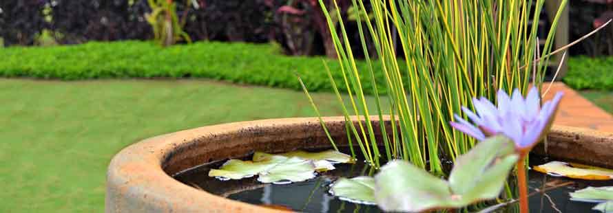 Kauai Landscaping Services