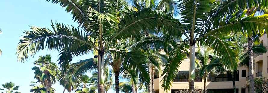 Kauai Tree Service